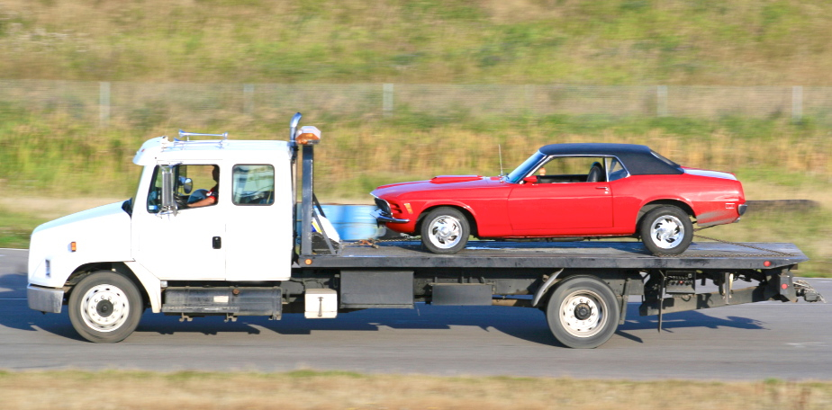 Cropped_Mustang_Small